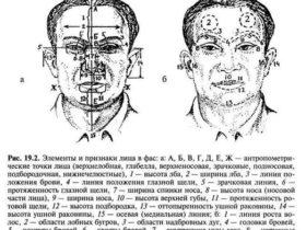 Правила описания человека по методу словесного портрета